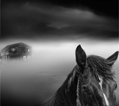 2514214_Tangoulis-Misty-Scapes-4-710x631