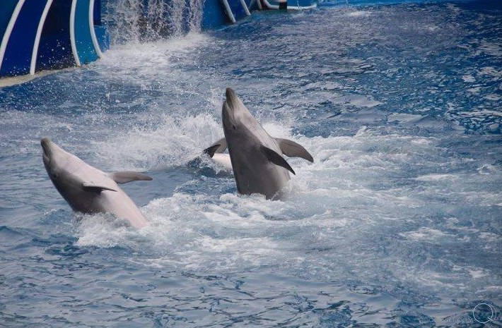 seaworld-caheo-photoqvd